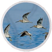 Short-billed Dowitchers In Flight Round Beach Towel