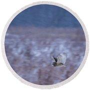 Short Eared Owl Hunting 3 Round Beach Towel