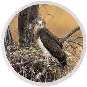 Short-toed Snake Eagle Circaetus Gallicus Round Beach Towel