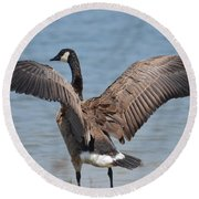 Show Of Feathers Round Beach Towel