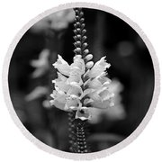 Obedient Plant In Black And White Round Beach Towel