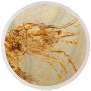 Shrimp Fossil Round Beach Towel