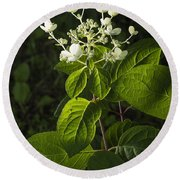 Shrub With White Blossoms Round Beach Towel