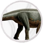 Shunosaurus, A Genus Of Sauropod Round Beach Towel