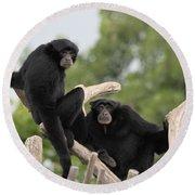 Siamang Monkeys Round Beach Towel