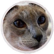 Siamese Cat Peers Into Unknown Round Beach Towel