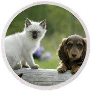 Siamese Kitten And Dachshund Puppy Round Beach Towel