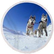 Siberian Husky Dogs Round Beach Towel