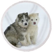 Siberian Husky Puppies Round Beach Towel