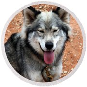 Siberian Husky With Blue And Brown Eyes Round Beach Towel
