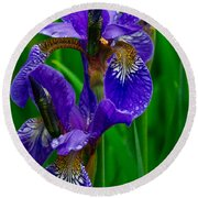 Siberian Iris Round Beach Towel