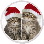 Siberian Kittens In Hats Round Beach Towel