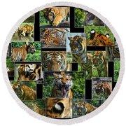 Siberian Tiger Collage Round Beach Towel
