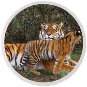 Siberian Tiger Cub Guarding Mom Wildlife Rescue Round Beach Towel