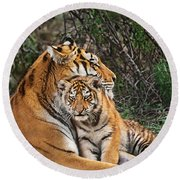 Siberian Tiger Mother And Cub Endangered Species Wildlife Rescue Round Beach Towel