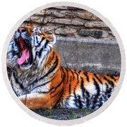 Siberian Tiger Nap Time Round Beach Towel