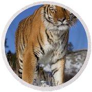 Siberian Tiger No. 1 Round Beach Towel