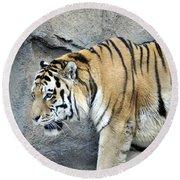 Siberian Tiger Panthera Tigris Altaica Usa Round Beach Towel