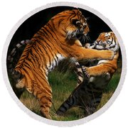 Siberian Tigers In Fight Round Beach Towel