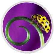 Side View Close Up Of Yellow Ladybug Round Beach Towel by Panoramic Images