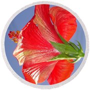 Side View Of Scarlet Red Hibiscus In Bright Light Round Beach Towel