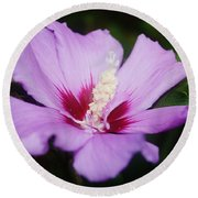 Side Yard Flower 1 Round Beach Towel