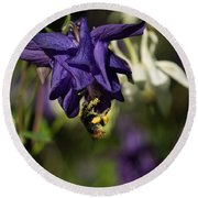 Silky Blue Columbine And A Busy Bee Round Beach Towel