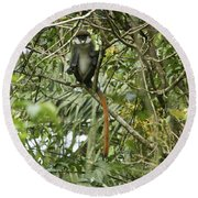 Silly Red-tailed Monkey Round Beach Towel