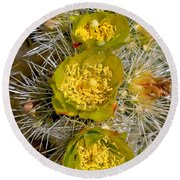 Silver Cholla Cactus Round Beach Towel