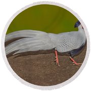 Silver Pheasant In Strutting Pose Round Beach Towel