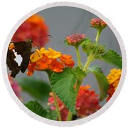 Silver-spotted Skipper Butterfly On Lantana Blossoms Round Beach Towel