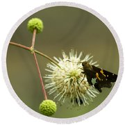 Silver-spotted Skipper On Buttonbush Flower Round Beach Towel
