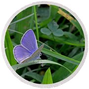 Silver Studded Blue Butterfly Round Beach Towel