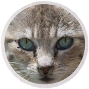 Silver Tabby But What Color Eyes Round Beach Towel