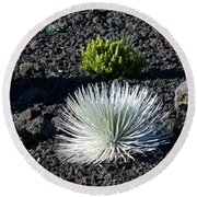 Silversword Plant Round Beach Towel