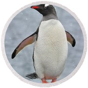 Simply Gentoo Round Beach Towel