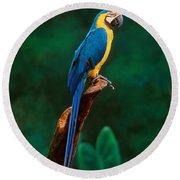 Singapore Macaw At Jurong Bird Park  Round Beach Towel
