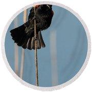 Blackbird Melody Round Beach Towel