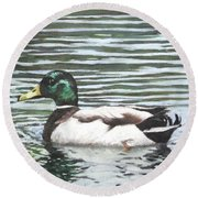 Single Mallard Duck In Water Round Beach Towel