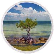 Single Mangrove Tree In The Gulf Round Beach Towel