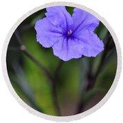 Single Purple Mexican Petunia Ruellia Brittoniana Round Beach Towel