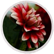 Single Red Dahlia Round Beach Towel