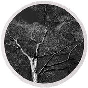 Single Tree With New Spring Leaves In Black And White Round Beach Towel