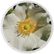 Single White Rose Db Round Beach Towel