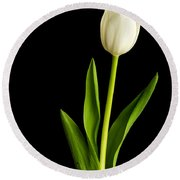 Single White Tulip Over Black Round Beach Towel by Edward Fielding