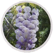 Single Wisteria  Round Beach Towel