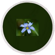 Sisyrinchium Angustifolium Round Beach Towel