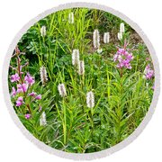 Sitka Burnet And Tall Fireweed In Katmai National Preserve-ak Round Beach Towel