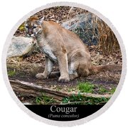 sitting Cougar Round Beach Towel