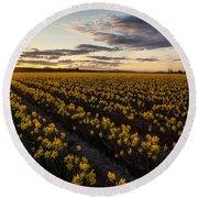 Skagit Daffodils Sunset Sunstar Round Beach Towel